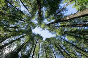 Αναφορικά με το θόρυβο που δημιουργείται εκ νέου σχετικά με το περιαστικό δάσος Θεσσαλονίκης (Σειχ Σου) και τη διαπιστωμένη προσβολή του από το φλοιοφάγο έντομο.